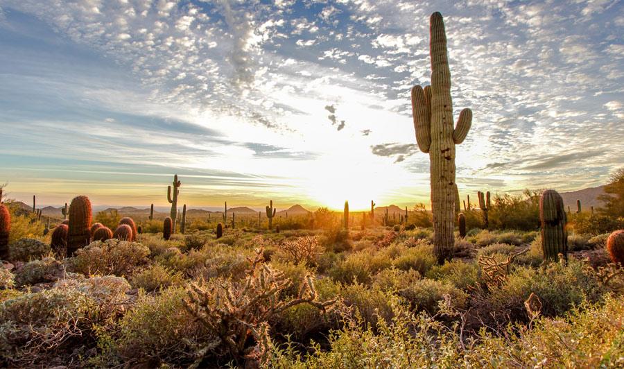 Usery Sonoran Desert Park