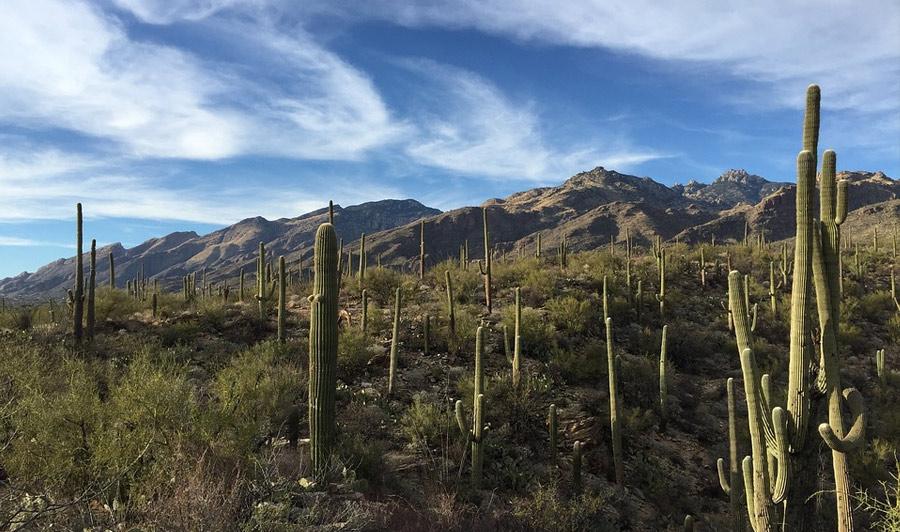 Saguaro Nationalpark, Sonora-Wüste