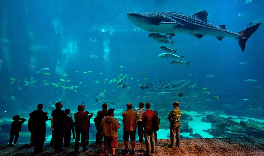 Absolut spektakulär: das Georgia Aquarium in Atlanta