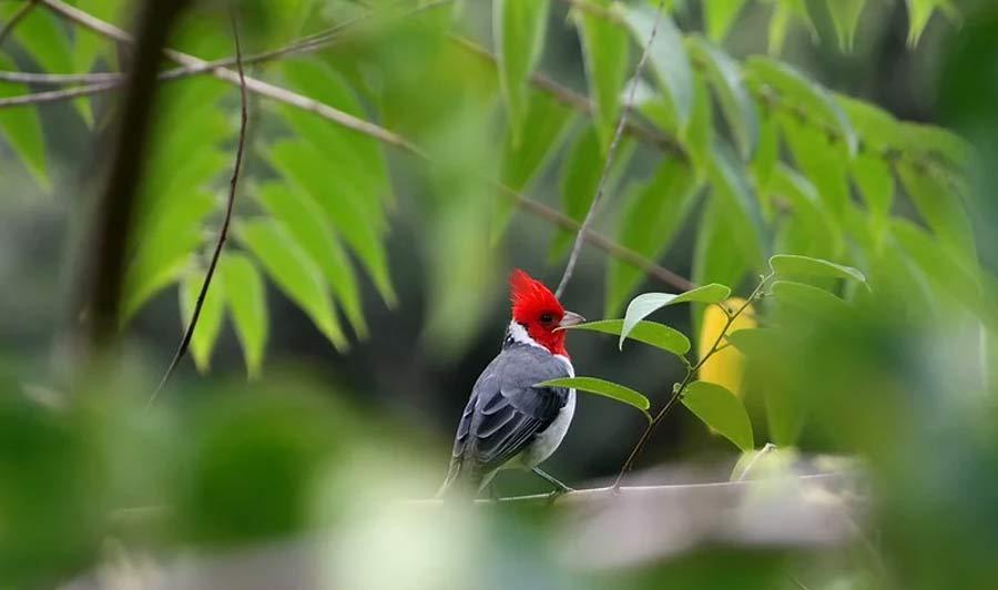 Hawaiis tropische Tier- und Pflanzenwelt