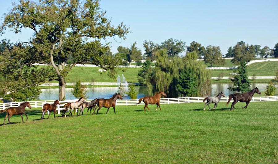 Typische Koppeln im Pferdeland Kentucky