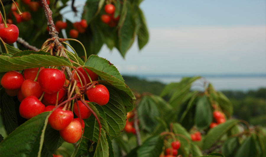Cherry Capital of the World: Traverse City