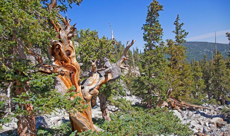 Great Basin Nationalpark (Ausflug oder Zwischenstopp) | Great Basin