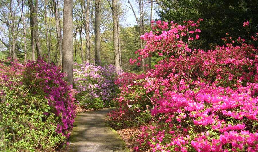 Besonders schön zur Azaleenblüte: Jenkins Arboretum im Brandywine Valley