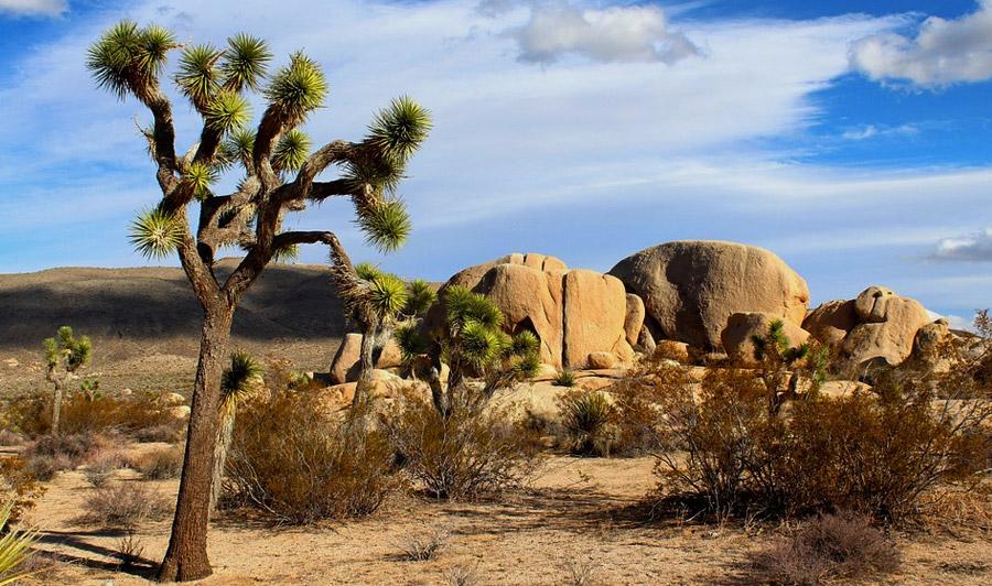 Joshua Tree Nationalpark |