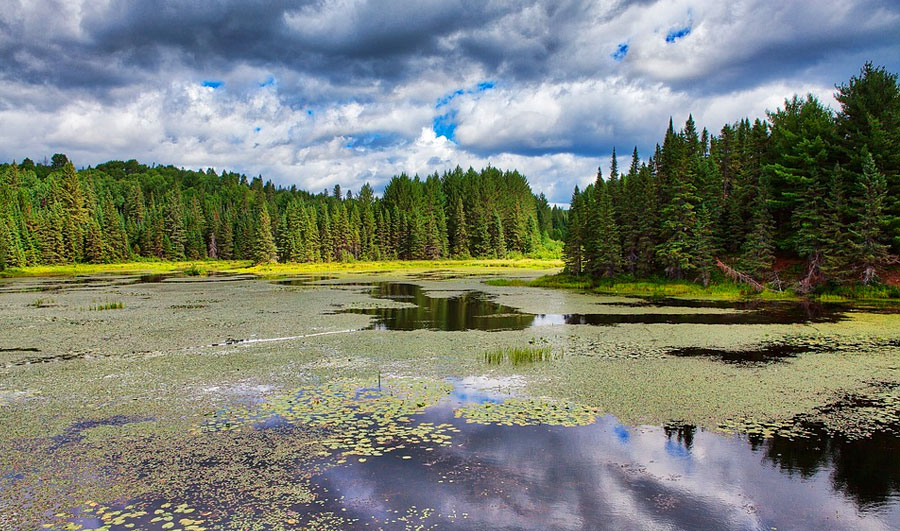 Algonquin Provincial Park | Algonquin Provincial Park