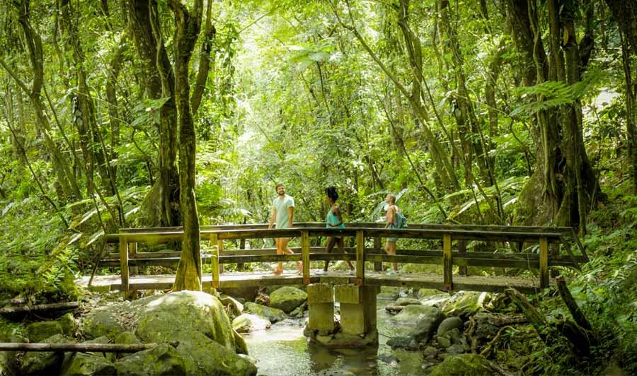 El Yunque Nationalpark - tropischer Regenwald