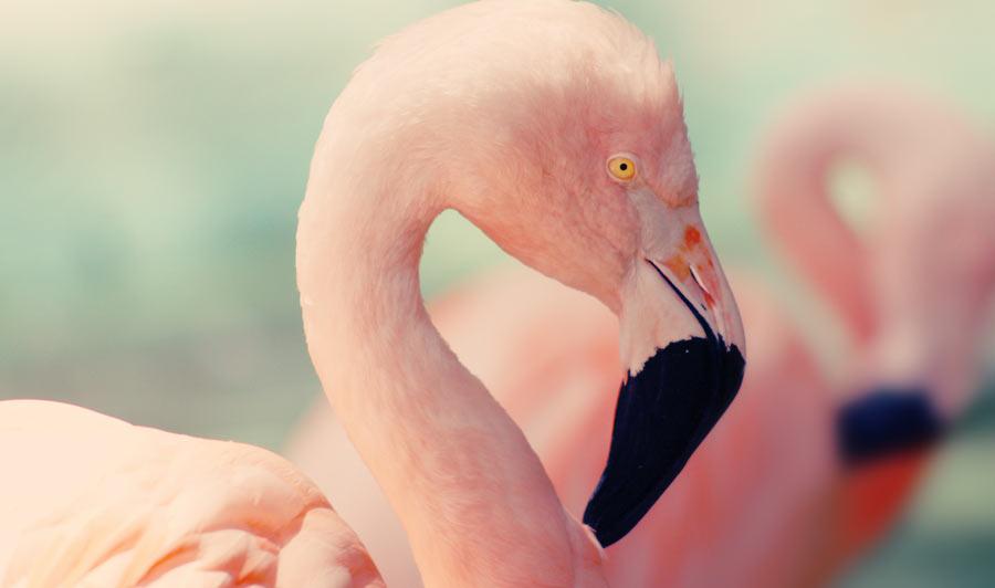 Flamingos in den Jungle Gardens