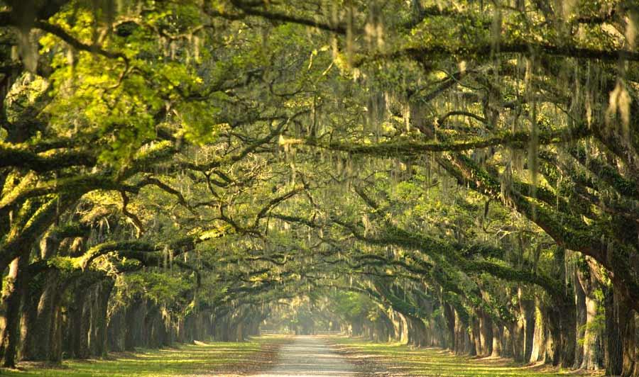 Südstaaten-Idylle nahe Savannah: markante Eichenallee der einstigen Wormsloe Plantation