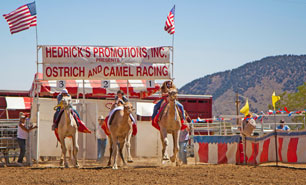 Virginia City Ostrich & Camel Race